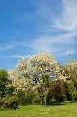 Heavenly Summer Garden