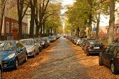 Street, Cars, Buildings And Autumn Leaves