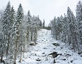 stock photo of deforestation  - Mountain deforest - JPG