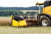 foto of rape-seed  - yellow combine in summer harvesting rape on farmlad rural scene - JPG