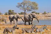 Elephant Namibia