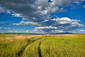 stock photo of macedonia  - Wheat field from Macedonia in summer with clouds - JPG