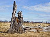 Landscape With Rotten Stump In The Meadow. April