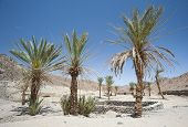 Oasis With Palm Trees In An Isolated Desert Valley
