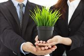 Hands Of Business People Holding Green Sapling.