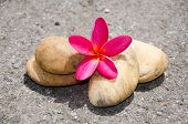Flower Plumeria Or Frangipani With Stone On Floor