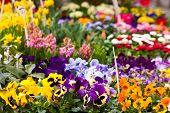 Blumen auf einem Markt
