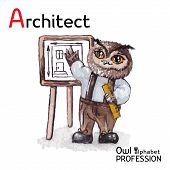 Alphabet Professor Owl Architect