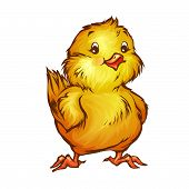 Vector illustration of chick in cartoon style