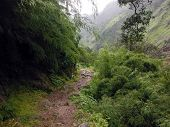 Misty Trail Of The Annapurna Trekking Circuit During Monsoon