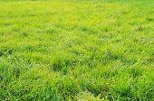 Beautiful Green Lawn