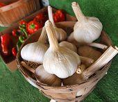 Garlic Bulbs In Basket