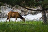 Feeding Elk In Yellowstone
