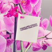 Congratulations Note With A Floral Bouquet