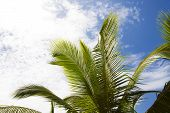 Beautiful Palm Trees With Cloudy Blue Sky