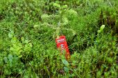 stock photo of phone-booth  - Red phone booth standing in the forest - JPG