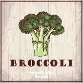 Fresh Vegetables Sketch Background. Vintage Hand Drawing Illustration Of A Broccoli