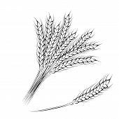 Hand drawing wheat ears