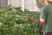 Trim the Hedge