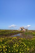 Ruins Among Yellow Flowers In Cadiz Marshes