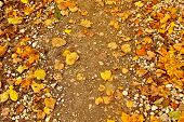 Autumn Loose Road With Yellow Leaves