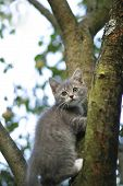 Kitten On A Tree
