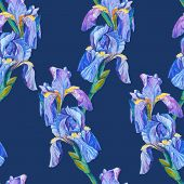 seamless pattern element with iris flowers and blue background