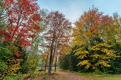 picture of driveway  - A gravel driveway running through colorful trees toward a rural roadway during a misty morning in the autumn season - JPG
