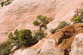 pic of semi-arid  - Utah Juniper and Pinio Pine trees in Colorado National Monument - JPG