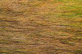 Background Of Long Wet Yellow Grass Texture