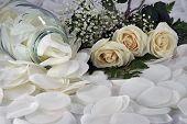 Feminine White Roses