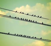 birds on wires over blue sky with clouds background toned with a vintage retro instagram filter