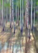 Dreamy forest landscape