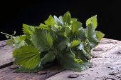 picture of nettle  - a bunch of fresh nettles used in alternative medicine - JPG