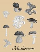 Edible and toxic forest Mushrooms placard
