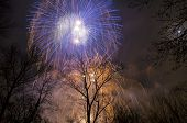 Fireworks in the sky above the trees