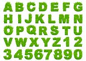pic of lawn grass  - Grass alphabet depicting letters and numbers with spring green grass texture for education or ecological concept design - JPG