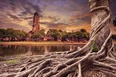Big Root Of Banyan Tree Land Scape Of Ancient And Old Pagoda In History Temple Of Ayuthaya World Her