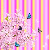 The Collage Of Colors Pink Hyacinth And Butterflies