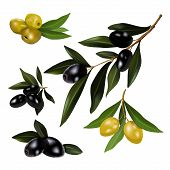 Green and black olives with leaves. vector illustration.