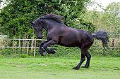 Pferd Aufzucht