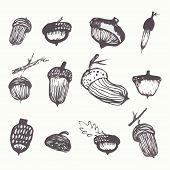 stock photo of acorn  - watercolor graphic vector acorns - JPG