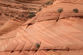 foto of butt  - Coyote Buttes are mountains located mainly in the Vermilion Cliffs National Monument in Utah USA - JPG