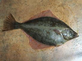 stock photo of flounder  - big fish flounder on brown stone background - JPG