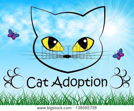 Cat Adoption Indicates Guardianship Kitty And Adopting
