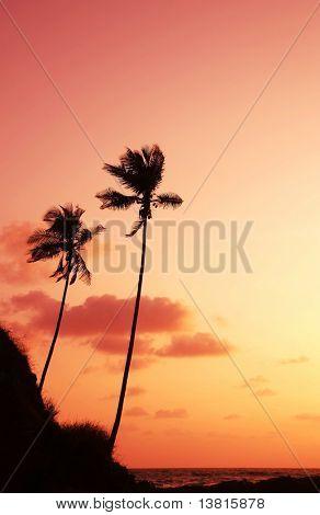 Постер, плакат: Ладонь на закат побережья моря, холст на подрамнике