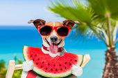 Dog On Hammock And Watermelon poster