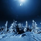 stock photo of winter landscape  - Winter forest - JPG