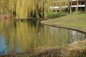 Willow&Ducks