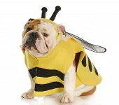 Dog Dressed Up Like A Bee